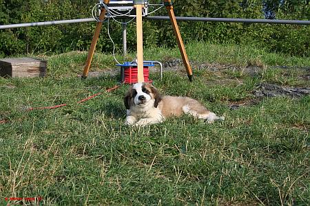 Bella bewacht das H-alpha Fernrohr